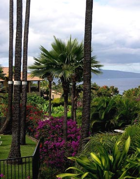 ocean view Wailea rental